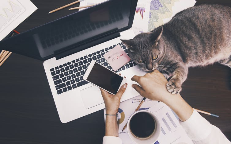 Working from home | image: Shutterstock/Creative Lab