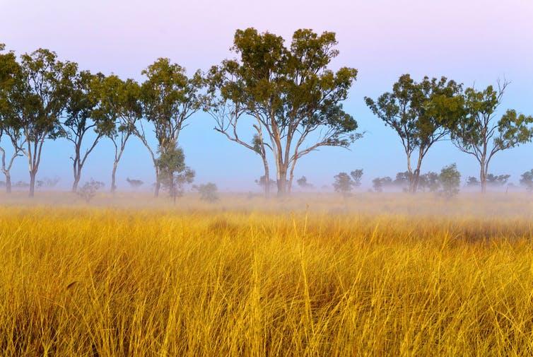 Native grasses | Photo: Shutterstock