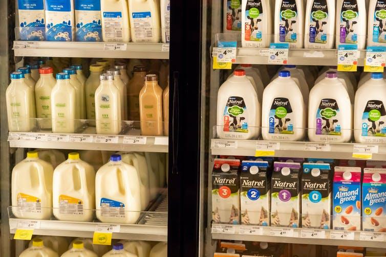 Milk and milk substitutes   Photo: Shutterstock