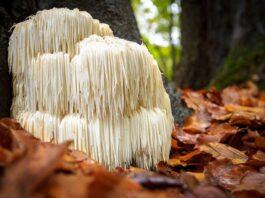 Vegan mushrooms as leather | Shutterstock