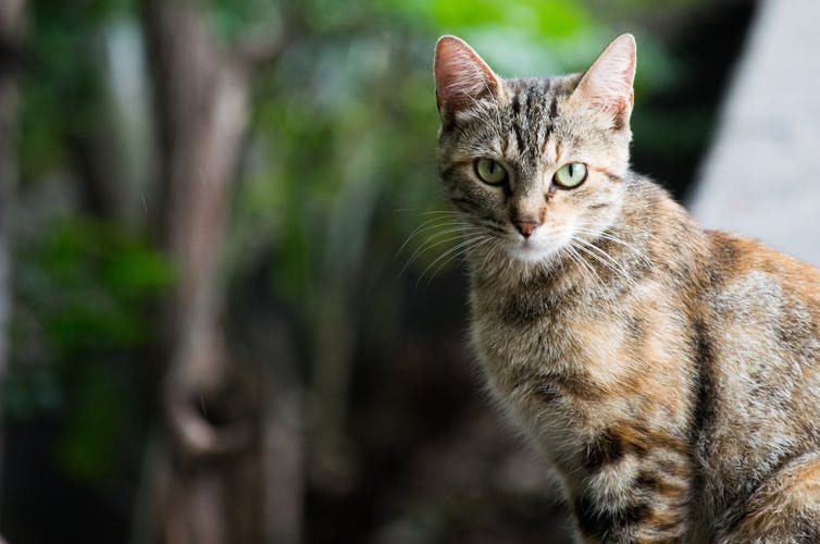 Cat   Rotiv Artic:Unsplash