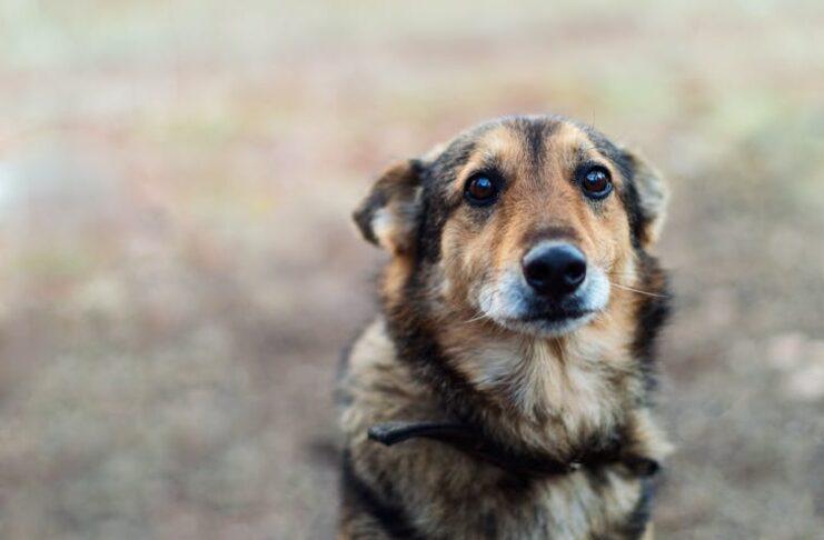 Dog | Photo: Shutterstock