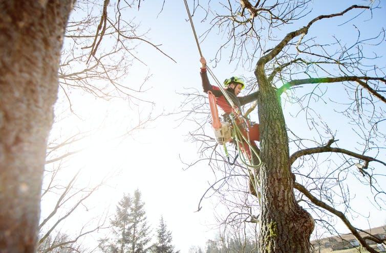 arborist, tree lopper | Photo from Shutterstock